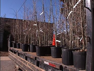Seminars To Educate About Tree Care