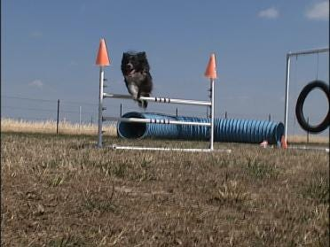 Top Dogs Coming To Tulsa