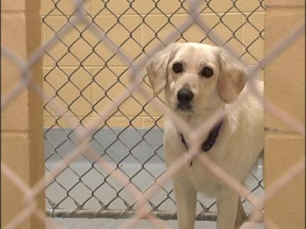 Business Up 25 Percent At Spay Oklahoma
