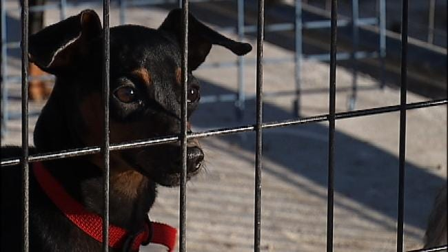Puppy Mill Owners Dump Dogs At Tulsa Animal Shelter
