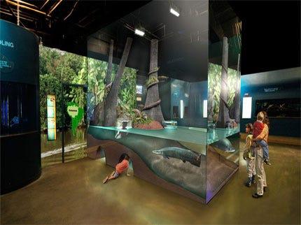 Oklahoma Aquarium Smashes Into New Exhibit
