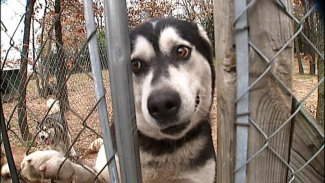 Oklahoma Dog, Cat Breeders Face Tougher Rules