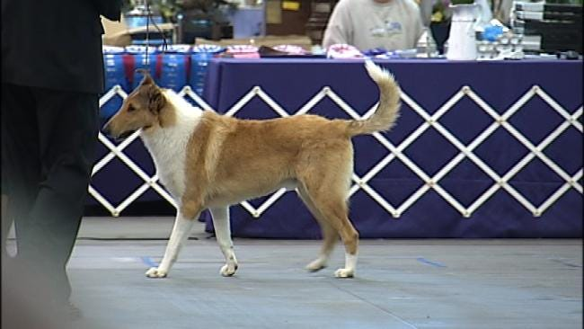 Get Reacquainted With Collies At Tulsa Expo Center