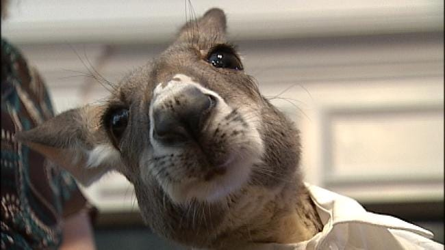 Irwin The Kangaroo Gets Help From Anonymous Friend