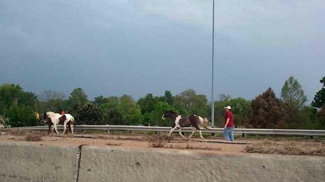 Horses Run Loose On I-44 In Tulsa