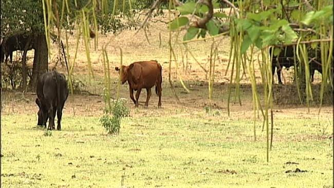 Green Country Ranchers See Cattle-Rustling Rash