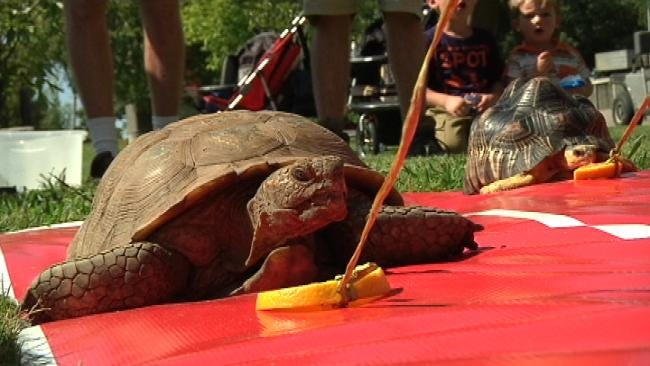 Turtles Race Brings Attention To Tulsa Zoo Run