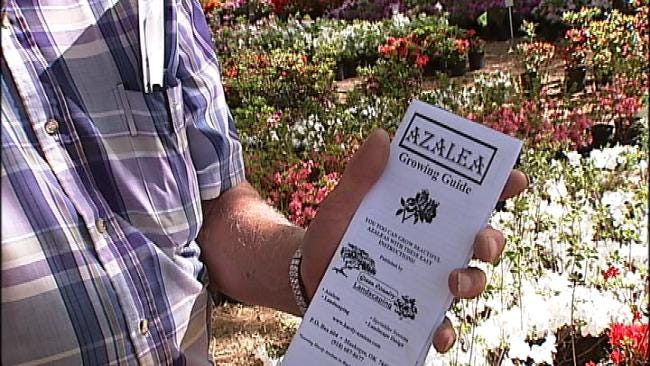 Spring Blooms Come Early At Muskogee Azalea Festival