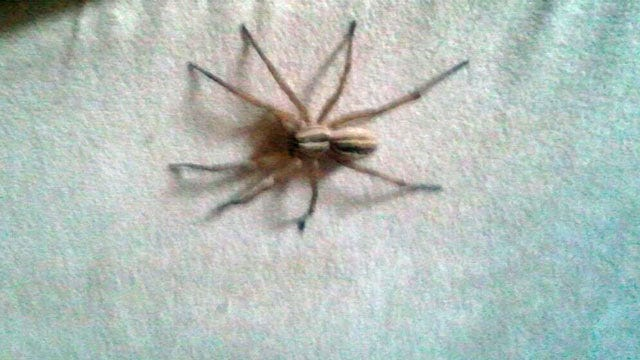 Expert: Mild Winter Leads To Oklahoma Insect, Spider Population Explosion