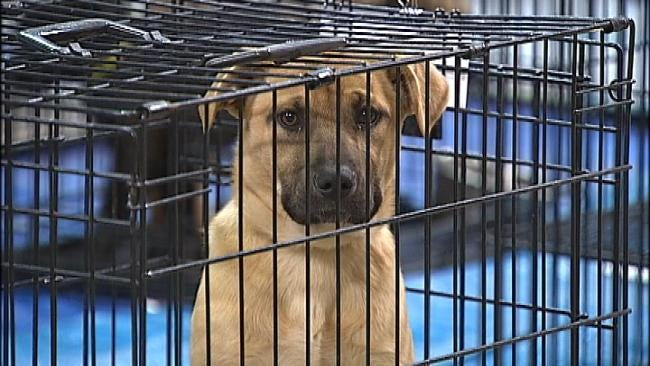 Homeless Tulsa Dogs Headed To Colorado To Be Adopted