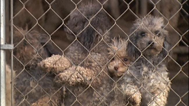 Critics Say New Pet Breeder Regulations Are Set Up To Fail