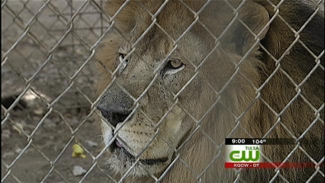 Broken Arrow Exotic Animal Sanctuary Closes To Public