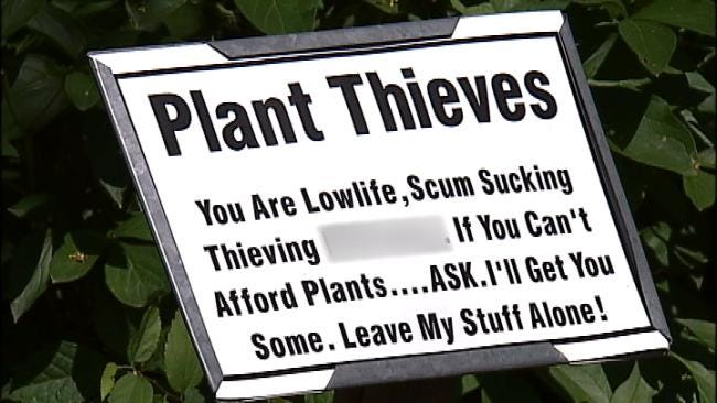 Maple Ridge Thief Caught On Tape Uprooting Plants From Flower Bed