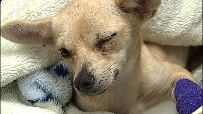 Tulsa Animal Rescue Uses Social Media To Raise Funds To Save Abandoned Dog