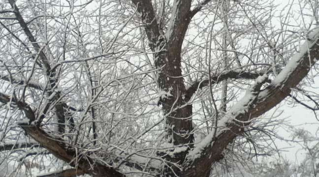 Winter Weather Advisory In Effect For Parts Of Northern Oklahoma