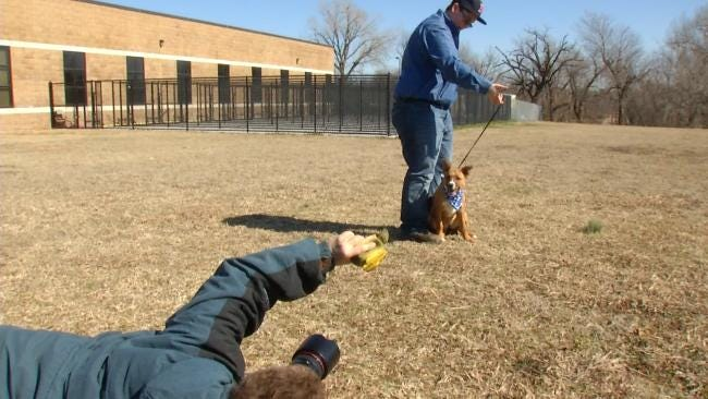 Pet Photographer Brings Out Best Side Of Tulsa Shelter Dogs