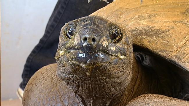 Tulsa Zoo Gives 100-Year-Old Tortoise Big Send-Off