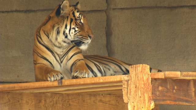 'Improve Our Tulsa' Initiative Could Have Big Impact On Zoo