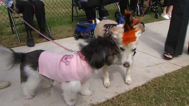 Tulsa Senior Center Celebrates New Dog Park With Pet Costume Contest