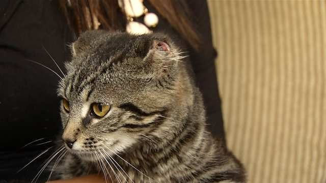 Claremore Mother Discovers Cat's Ears Cut Off, Left On Porch
