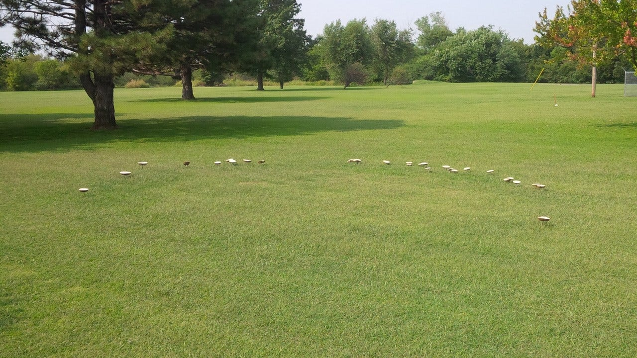 Wet Weather Brings Out 'Fairy Rings' In NE Oklahoma