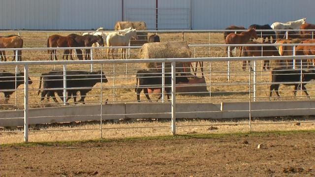 Malnourished Livestock Found In Muskogee County On Road To Recovery