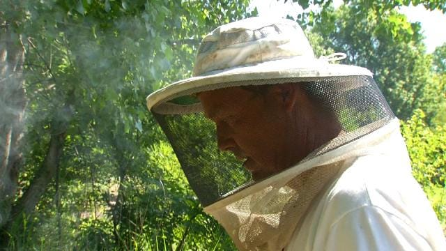 Saving Oklahoma's Bees