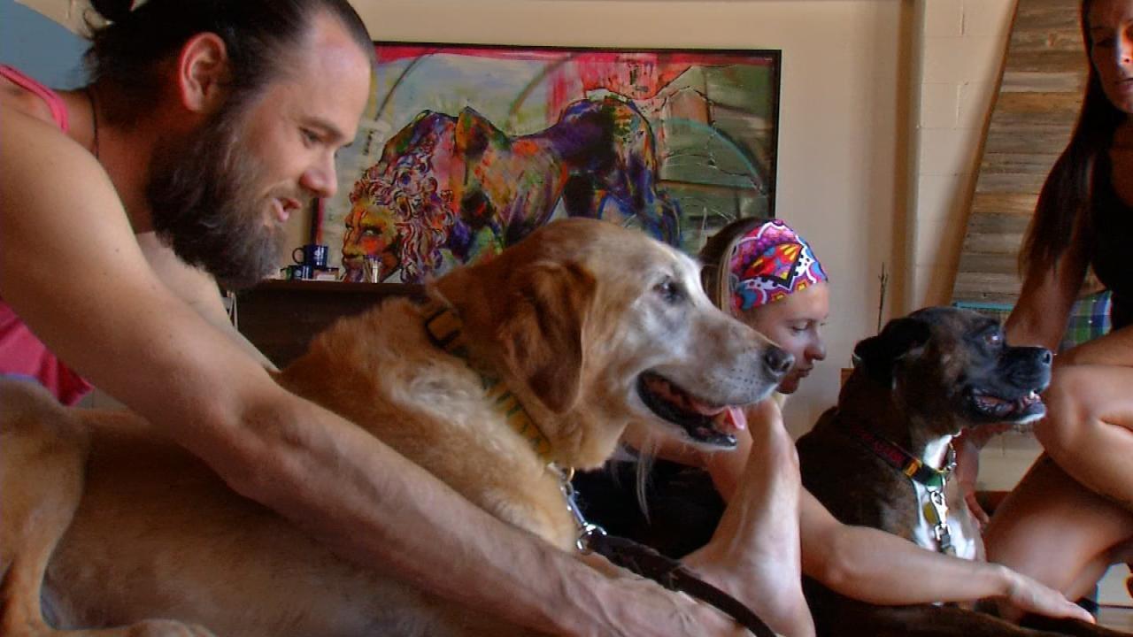 Catch A Dog Yoga Class Saturday In Tulsa