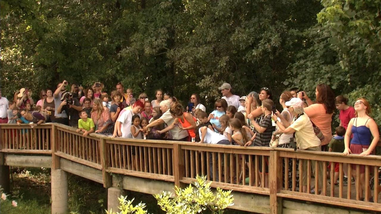 Crowds, Monarch Butterflies Swarm Tulsa Nature Reserve