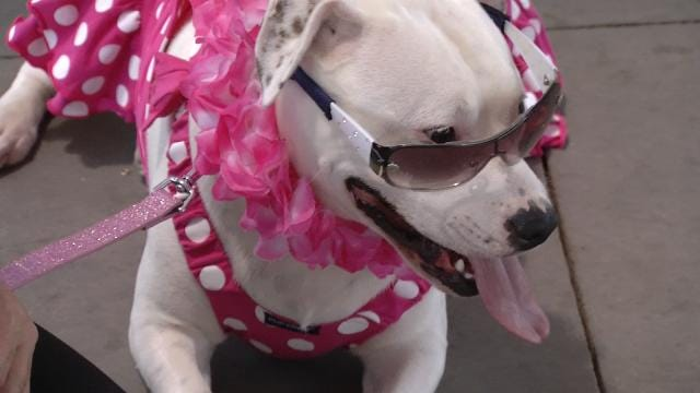 Oklahomans Looking For Furry Friend Have A Chance At Rock And Rescue