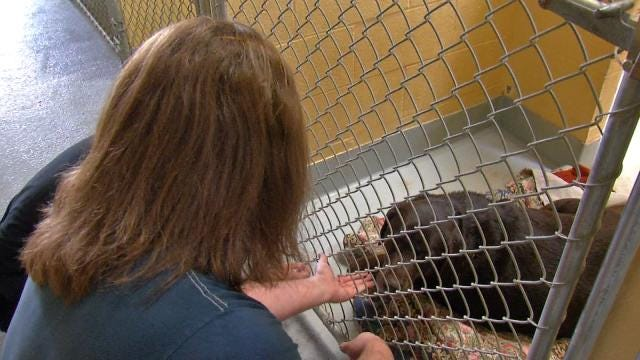 Families Still Searching For Pets After Sand Springs Tornado