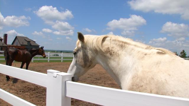 Horses Weather Inola Tornado Outside Stable