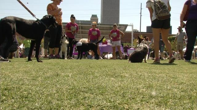 Labapalooza Brings Rescue Dogs Together With New Owners