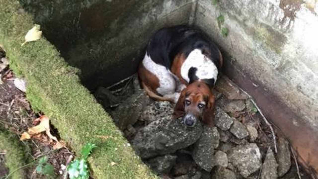 Dog Stands Watch Over Trapped Canine Buddy For Week