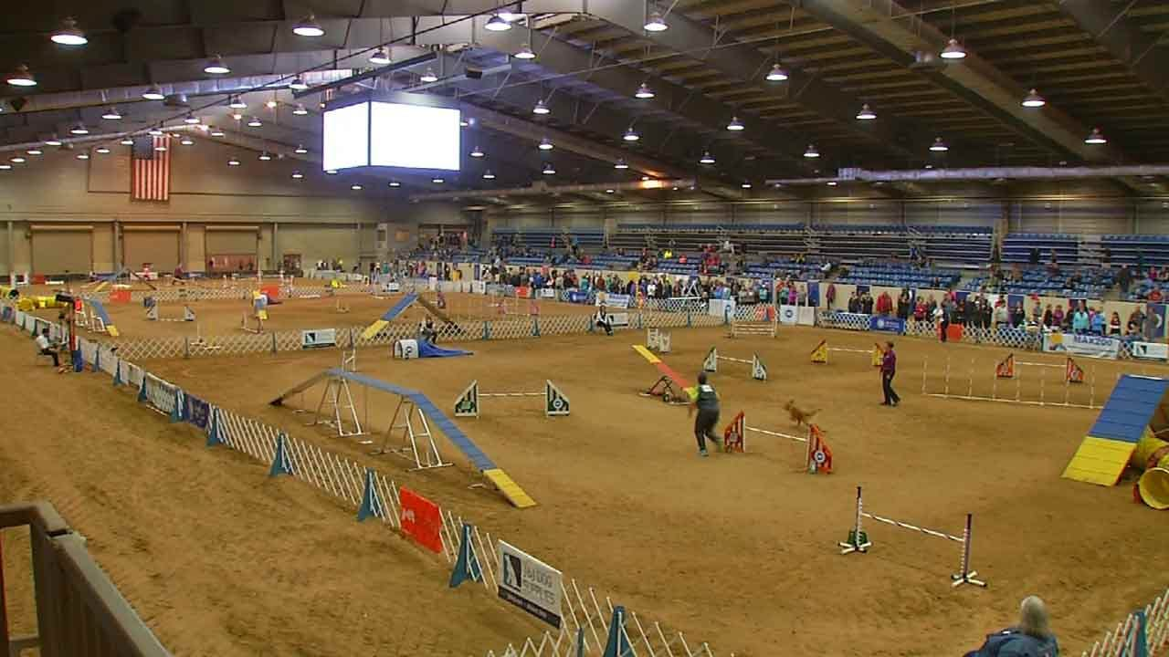 Top Dogs In Tulsa For National Agility Championships