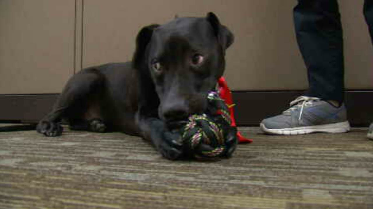 Rogers Co. Court Therapy Dog Celebrates Birthday