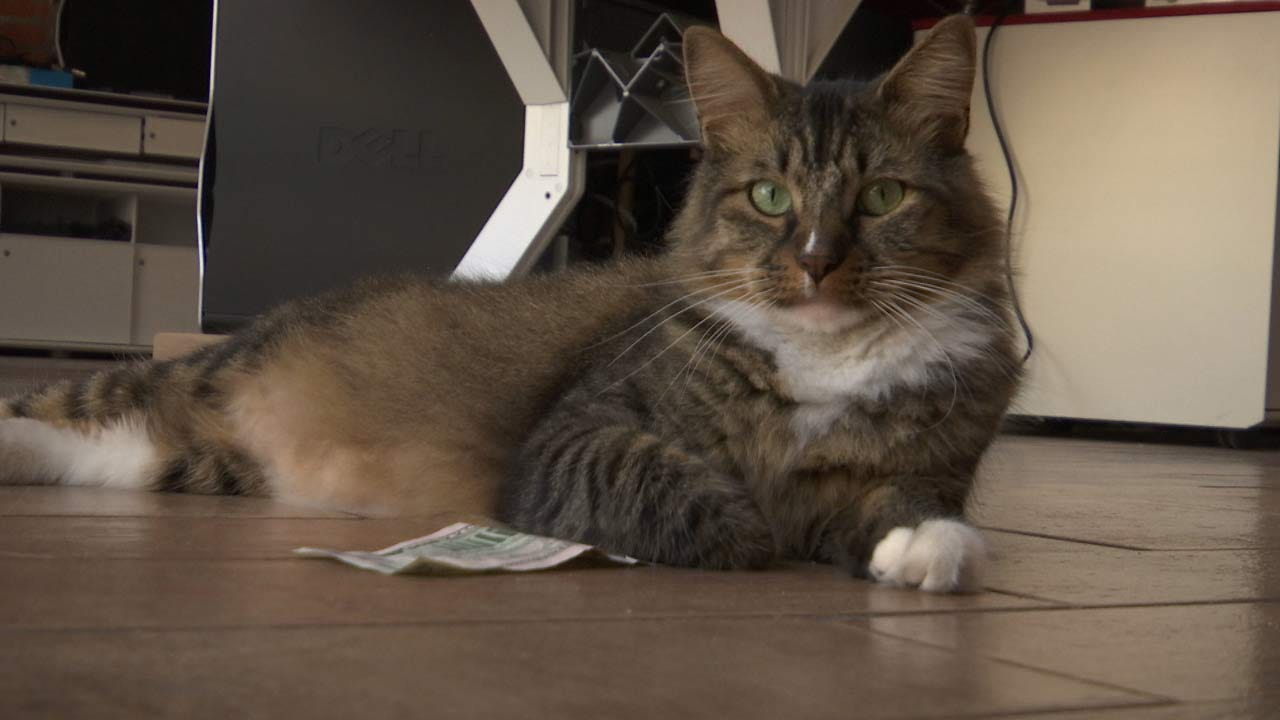 Downtown Tulsa's CASHnip Kitty 'Stealing' Money To Help Homeless