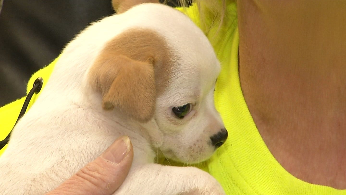 Pawhuska Women Claim City Is Hampering Efforts To Save Dogs From Euthanization