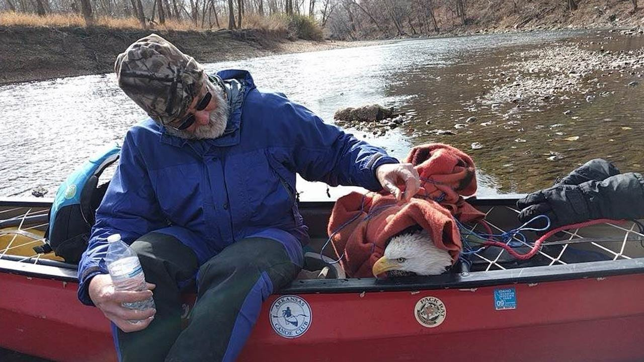 Friends On Illinois River Float Trip Rescue Trapped Bald Eagle
