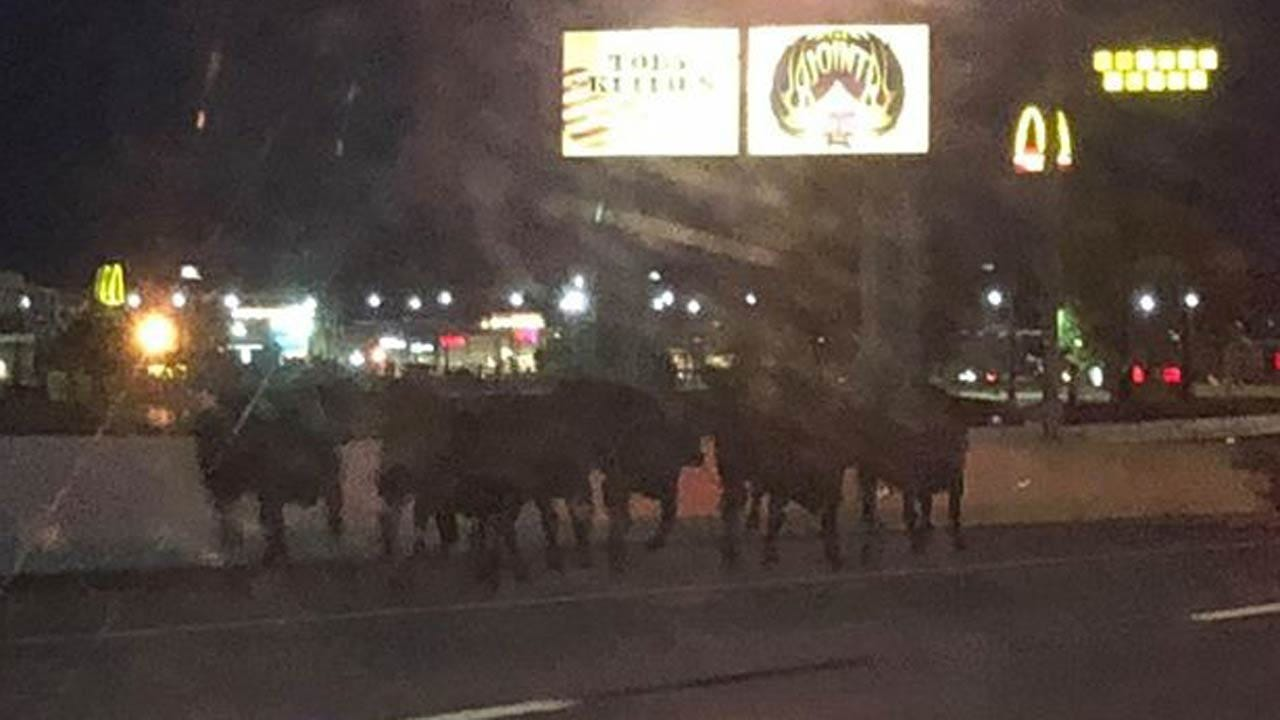 OHP: Cattle Corralled After Escaping Trailer On I-44 In Catoosa