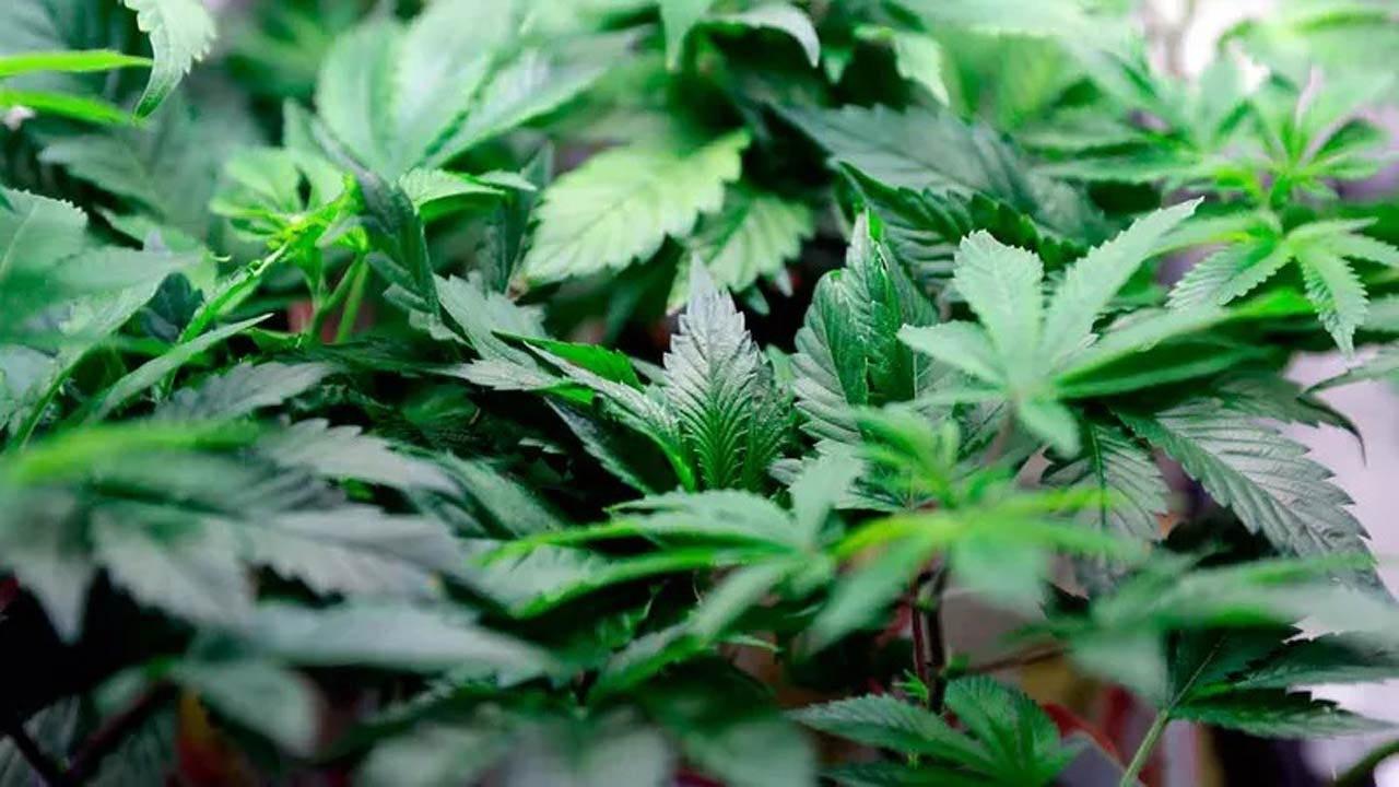 New Tax Revenue Part Of Oklahoma's Medical Marijuana Law