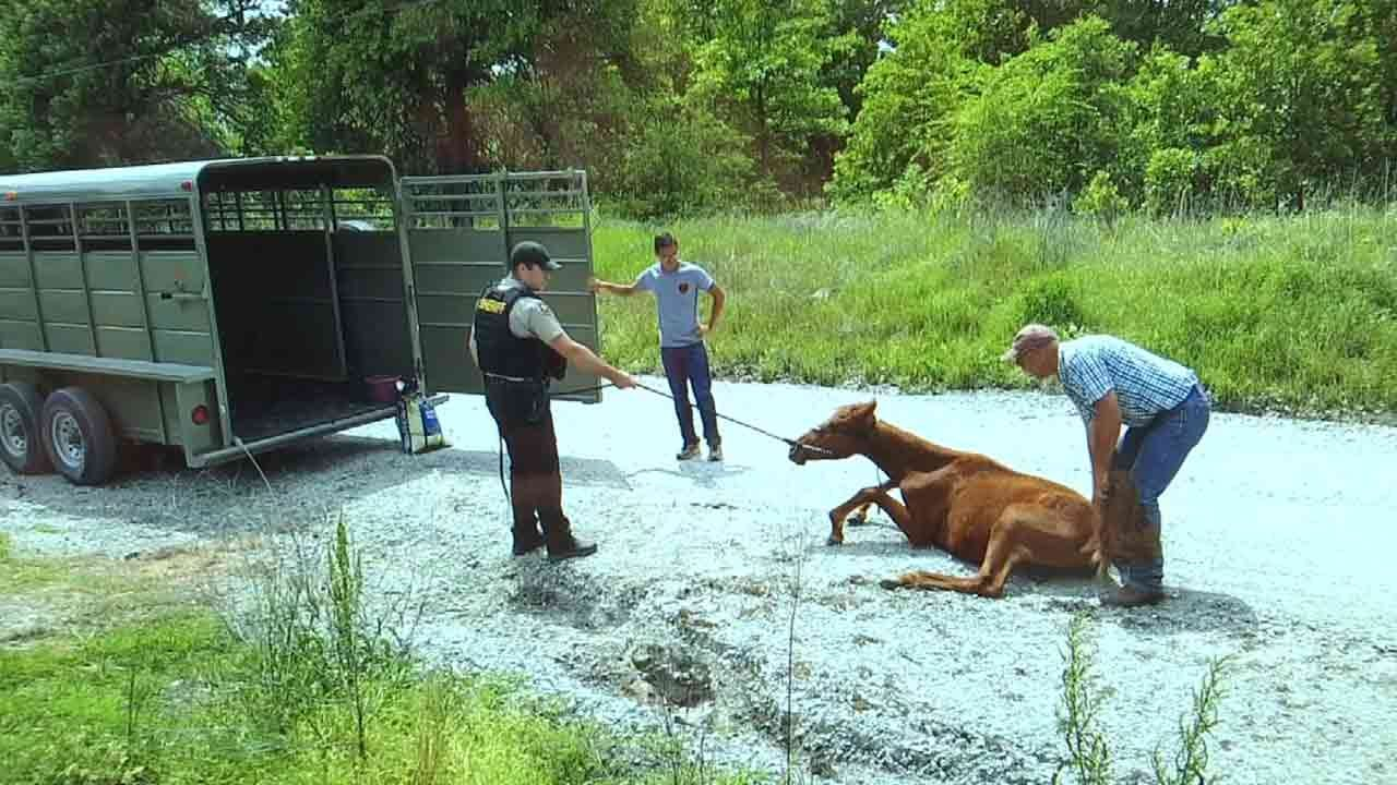 Malnourished Wagoner County Horses Rescued Thanks To Veterinarian