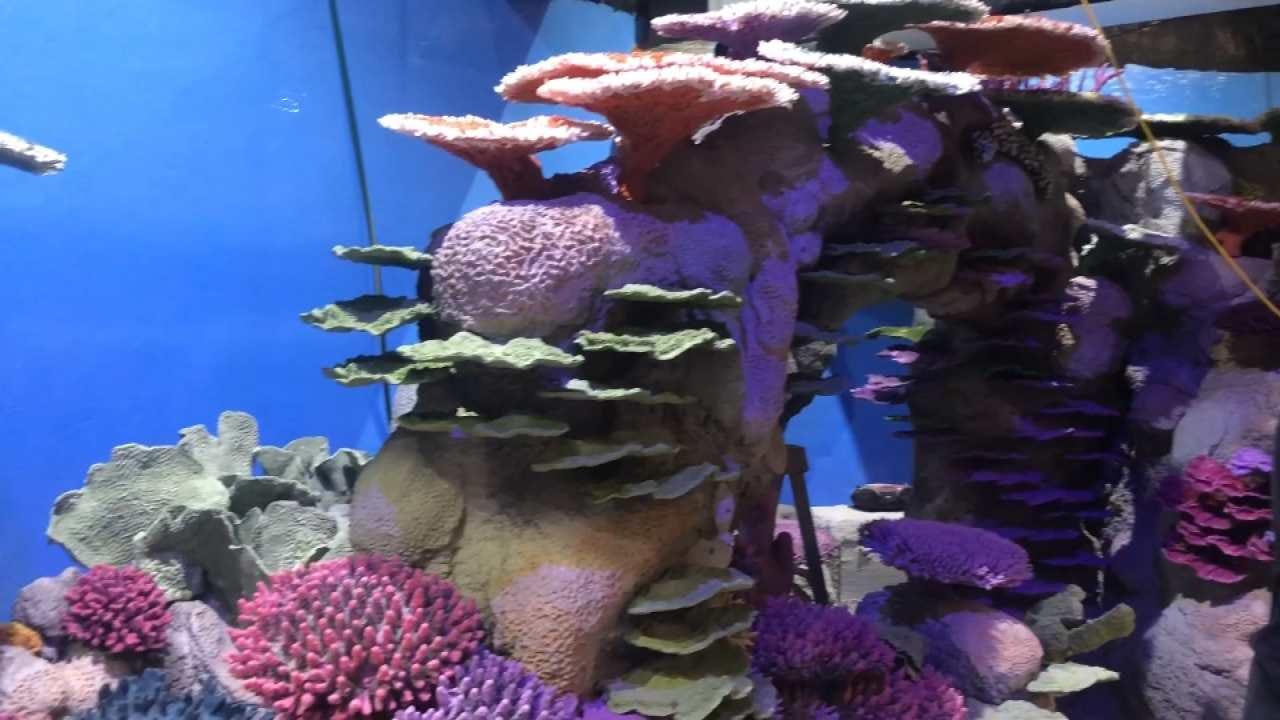 Oklahoma Aquarium's 'Polynesian Reef' To Open This Summer