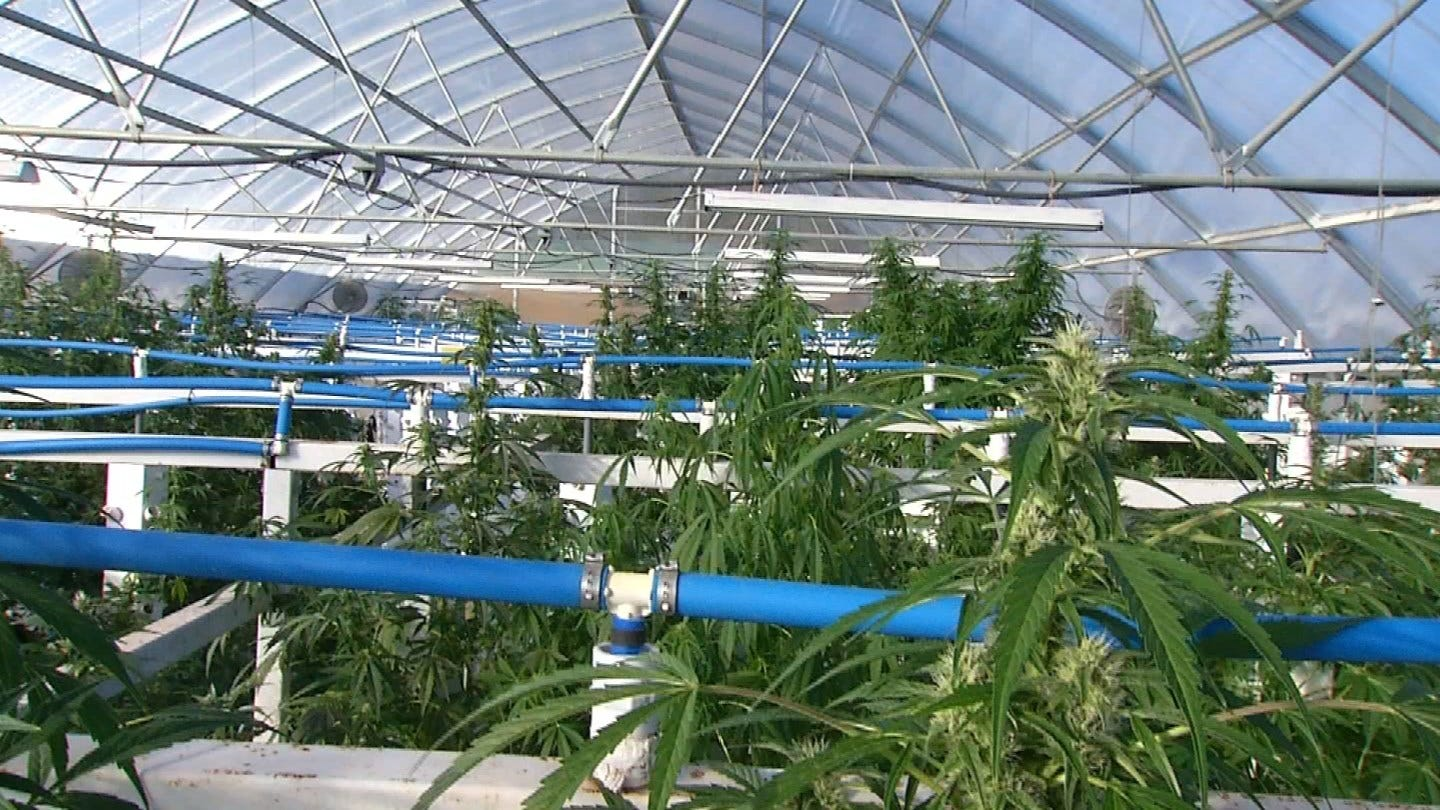 Green Country Med. Marijuana Grower Almost Ready For 1st Large Harvest