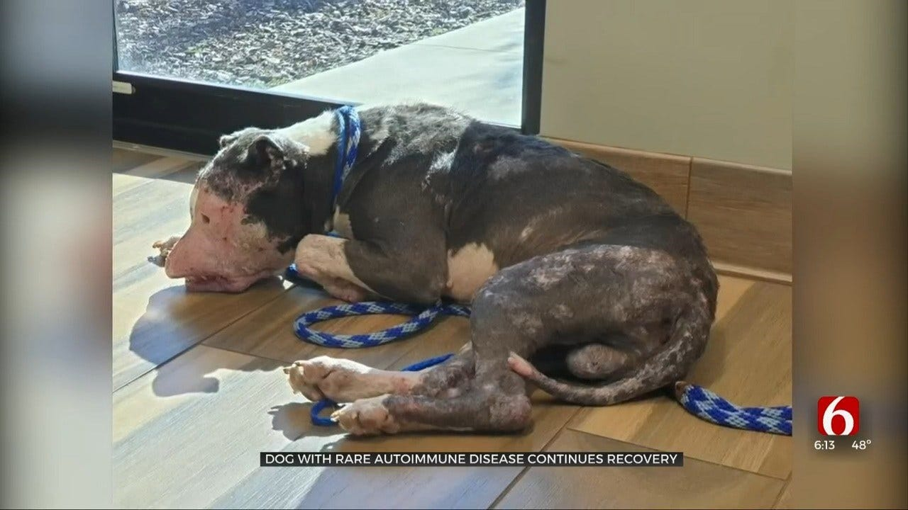 Dog With Rare Autoimmune Disease Continues Recovery