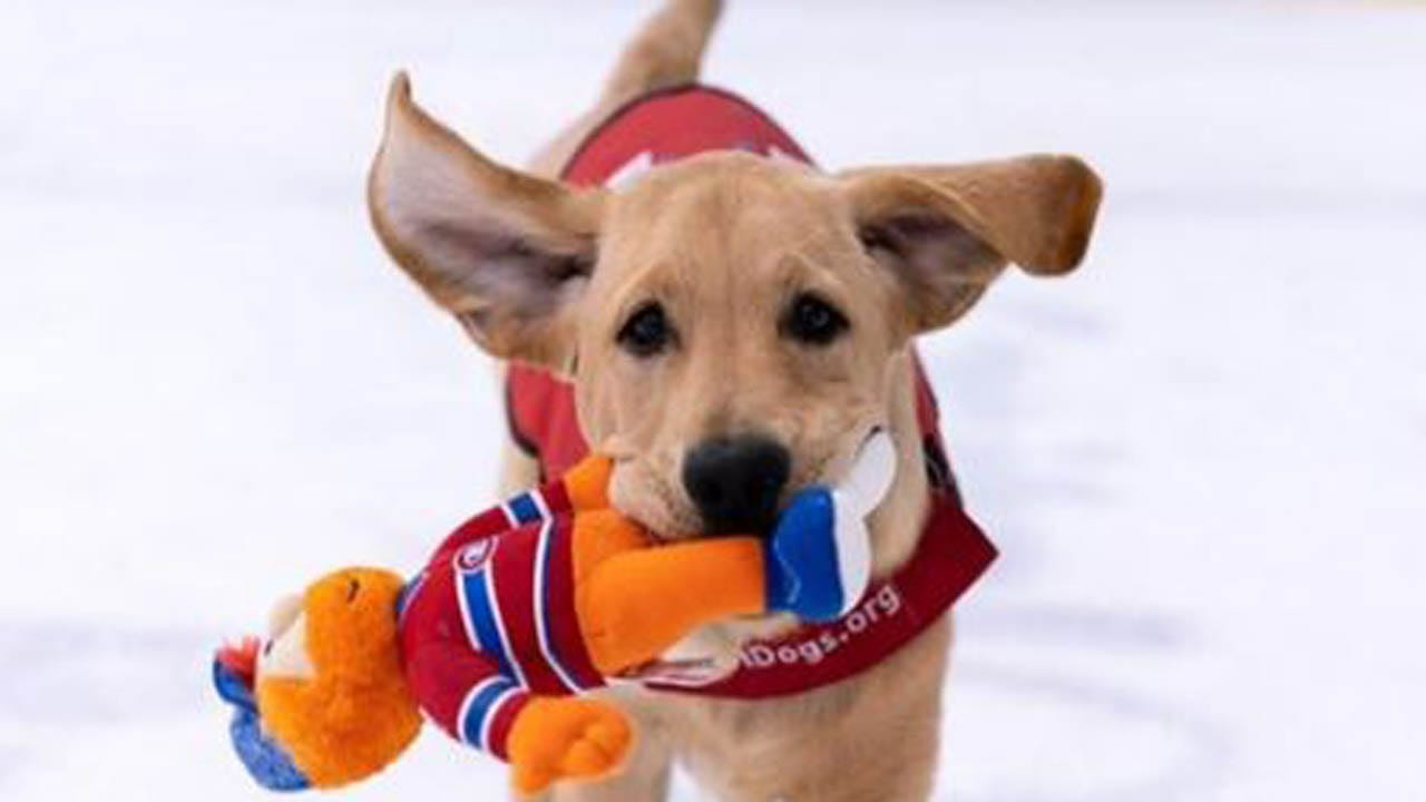 Captain, The Washington Capitals' Puppy, Will Soon Get Chance As A Service Dog