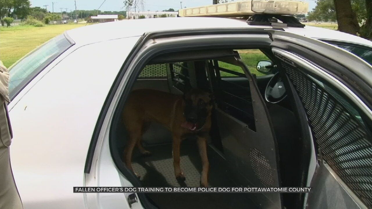 Fallen Officer's Dog Being Trained As Police K9