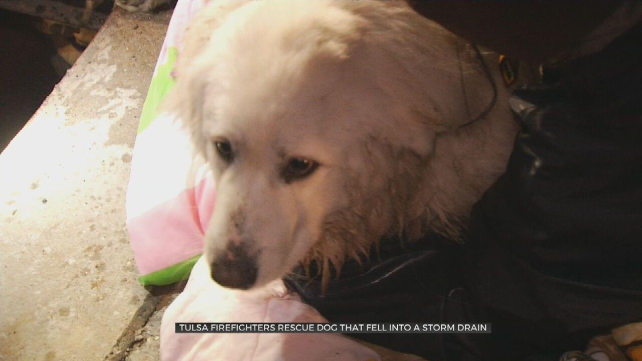 Tulsa Firefighters Rescue Dog From Drain