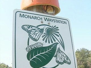 Monarch butterfly capital set for festival