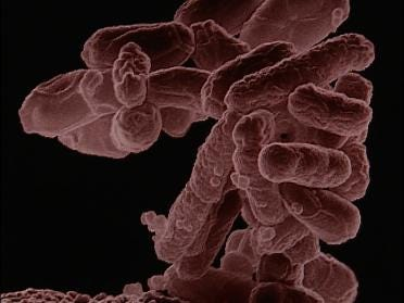 E. Coli has girl in the fight for her life
